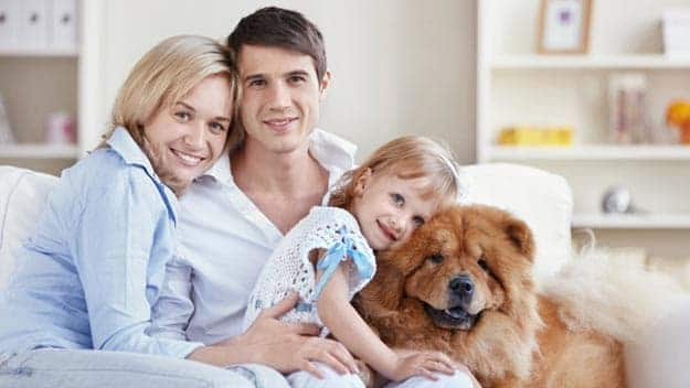 Wills & Trusts dog-young-family Direct Wills Merseyside